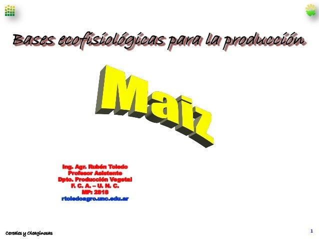 Bases ecofisiológicas para la producción  Ing. Agr. Rubén Toledo Profesor Asistente Dpto. Producción Vegetal F. C. A. – U....