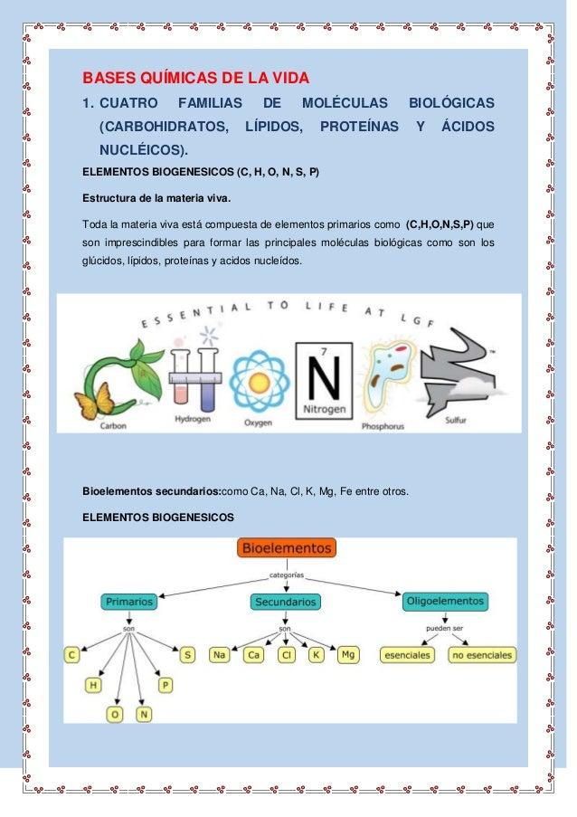 BASES QUÍMICAS DE LA VIDA 1. CUATRO FAMILIAS DE MOLÉCULAS BIOLÓGICAS (CARBOHIDRATOS, LÍPIDOS, PROTEÍNAS Y ÁCIDOS NUCLÉICOS...