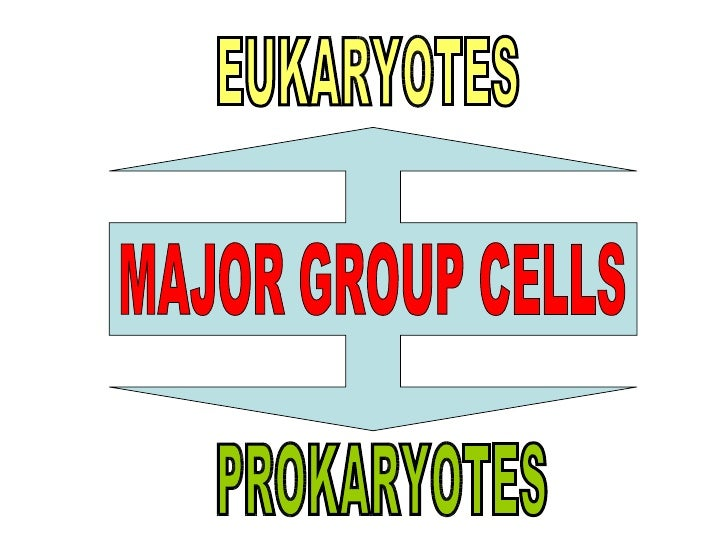 prokaryotic cells existed for about two billion years Unformatted text preview: for 2 billion years, cells were tiny packages of molecules, each enclosed in a membranethese were prokaryotic cells, which lived separately from one another and.