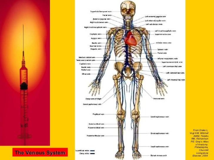 Basic Intravenous Therapy 1: Anatomy