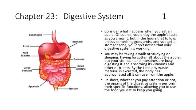 Chapter 23: Digestive System 1 • Consider what happens when you eat an apple. Of course, you enjoy the apple's taste as yo...