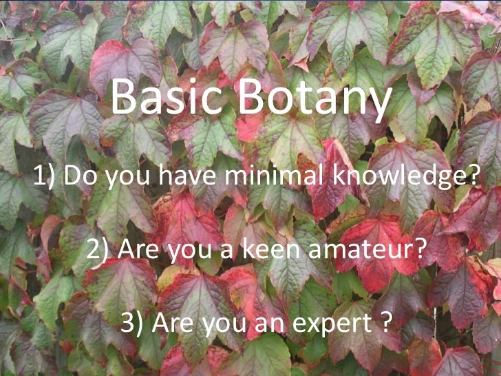 Basic Botany1) Do you have minimal knowledge?   2) Are you a keen amateur?      3) Are you an expert ?