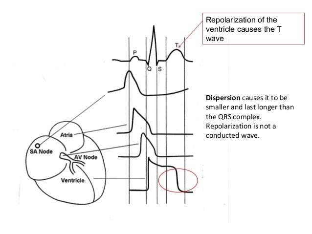 basic cardiac electrophysiology and ecg concepts 20120902  u5317 u5340