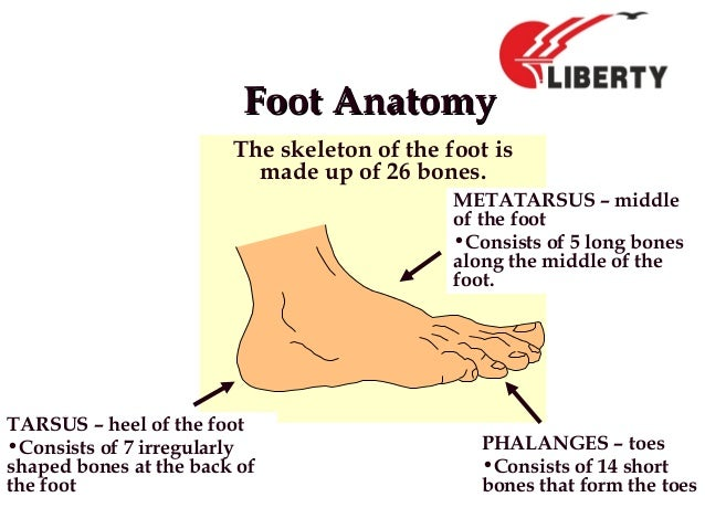 Basic Foot Anatomy and Foot Mechanics