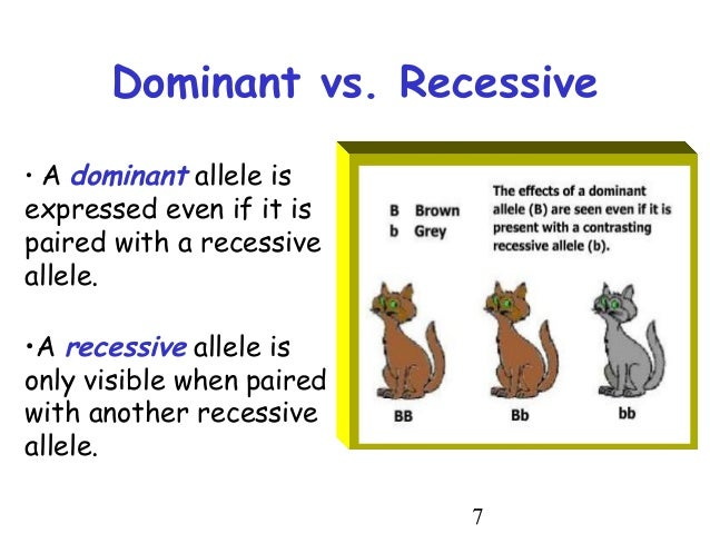 definition of dominant and recessive gene Recessive and dominant alleles you will recall that genes have different forms called alleles an allele can be recessive or dominant a recessive allele only shows if the individual has two copies of the recessive allele.