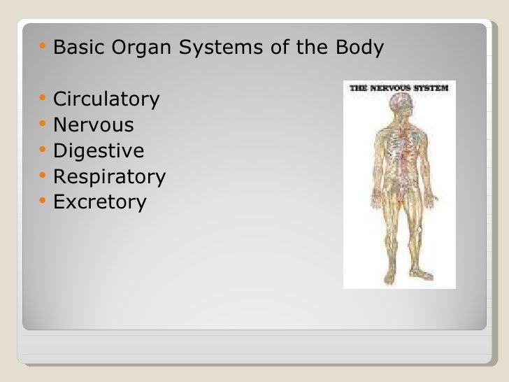 Basic Human Anatomyppt Powerpoint 1