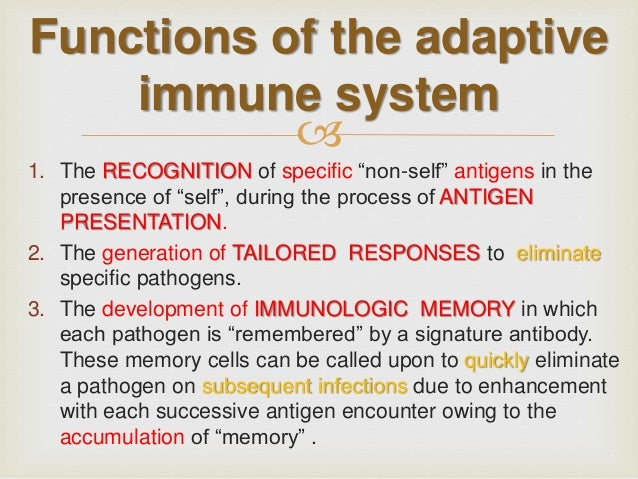Basic immunology from the dermatologic point of view (adaptive immuni…