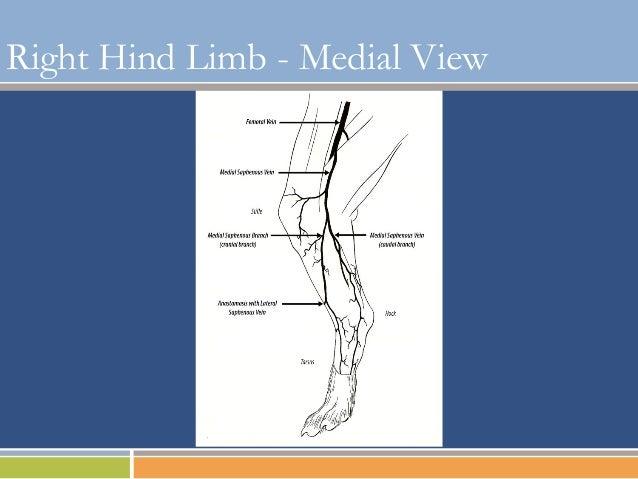 Basic IV Catheter Placement