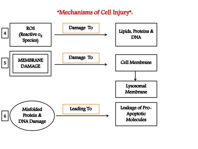 Basic principles of cell injury