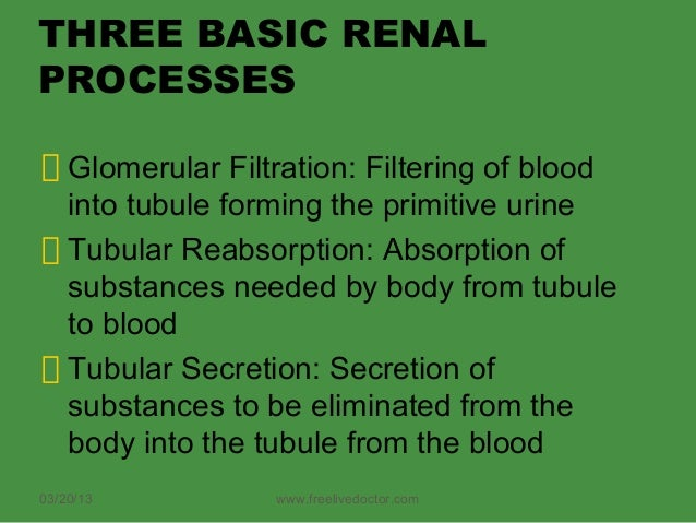 THREE BASIC RENALPROCESSES    Glomerular Filtration: Filtering of blood    into tubule forming the primitive urine    Tubu...