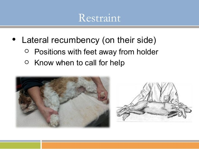 basic restraint and understanding of aggression in dogs