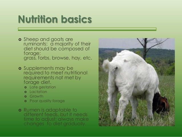 Basic sheep and goat husbandry
