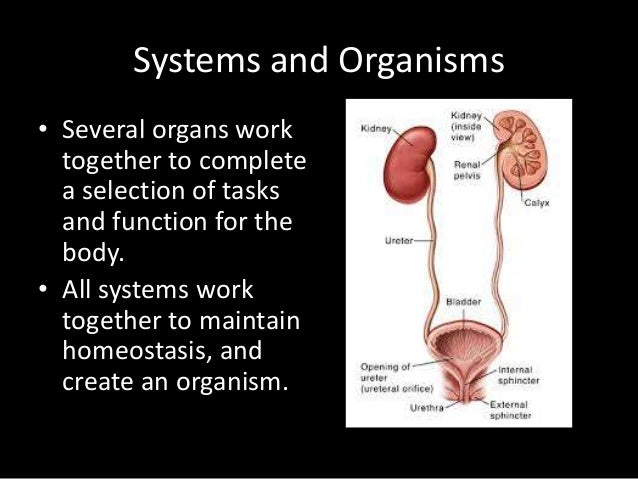 Anatomy and Physiology Basics IHS