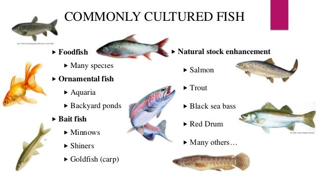 Basics of fisheries and aquaculture for Ornamental pond fish types