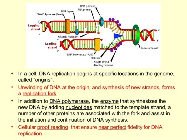 when an rna strand forms using dna as a template - basics of molecular biology
