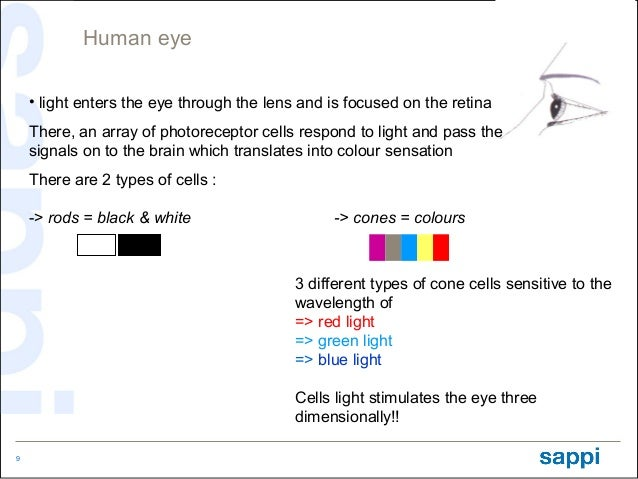 Human eye    • light enters the eye through the lens and is focused on the retina    There, an array of photoreceptor cell...
