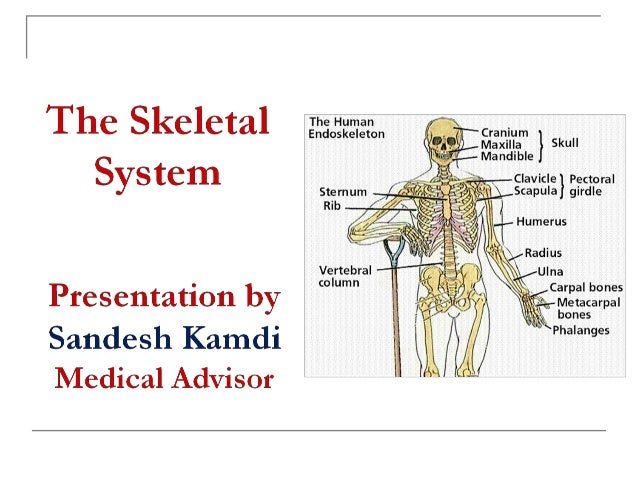 The Skeletal System   Topics to be covered   Functions of Bone and Skeletal System   Structure of Bone   Histology of ...