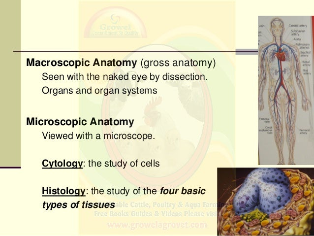 Basics of Veterinary Anatomy & Physiology