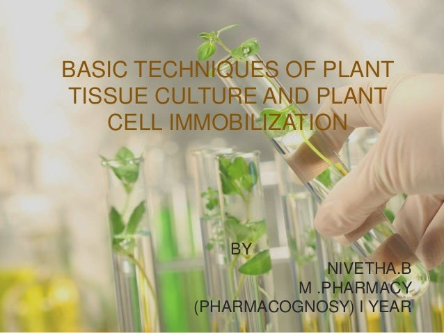BASIC TECHNIQUES OF PLANT TISSUE CULTURE AND PLANT CELL IMMOBILIZATION BY NIVETHA.B M .PHARMACY (PHARMACOGNOSY) I YEAR1
