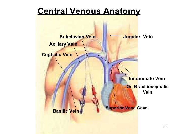 basic vascular access ice ppt presentation.ppt2, Cephalic Vein