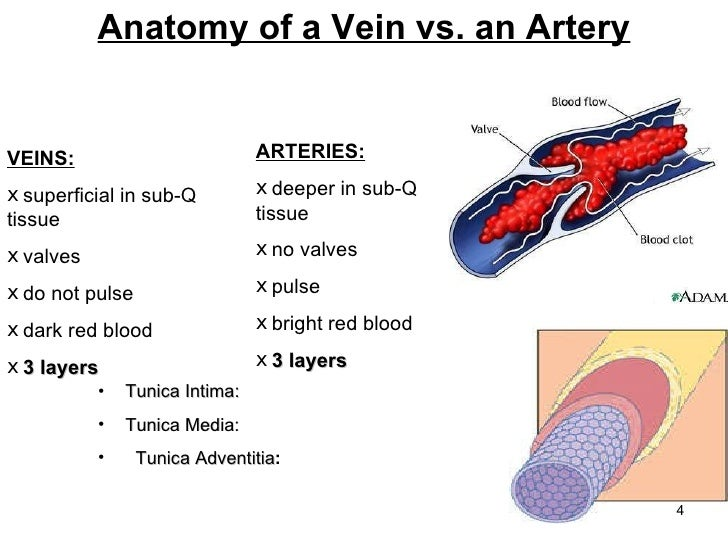 Basic Vascular Access Ice Ppt Presentationppt2