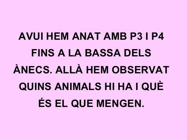 AVUI HEM ANAT AMB P3 I P4 FINS A LA BASSA DELS ÀNECS. ALLÀ HEM OBSERVAT QUINS ANIMALS HI HA I QUÈ ÉS EL QUE MENGEN.