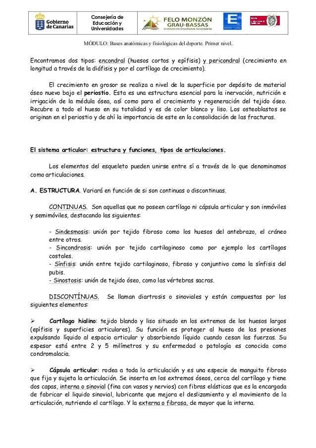 BASES ANATÓMICAS Y FISIOLÓGICAS DEL DEPORTE
