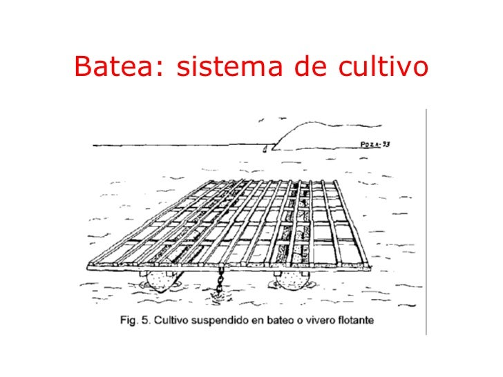 Batea: sistema de cultivo