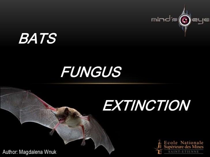 BATS                         FUNGUS                             EXTINCTIONAuthor: Magdalena Wnuk