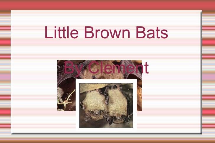 Little Brown Bats By Clement