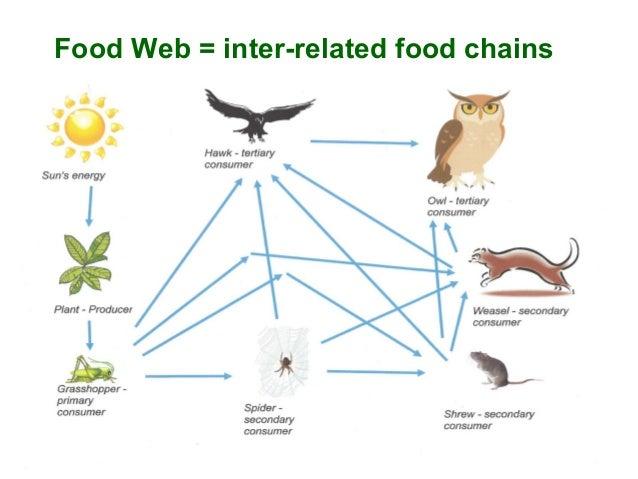 Bat Cave Food Chain Diagram Circuit Connection Diagram
