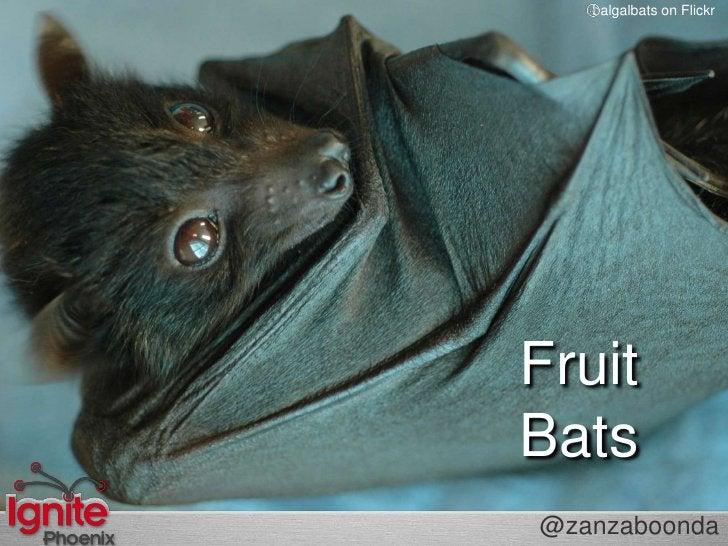 balgalbatson Flickr<br />FruitBats<br />@zanzaboonda<br />