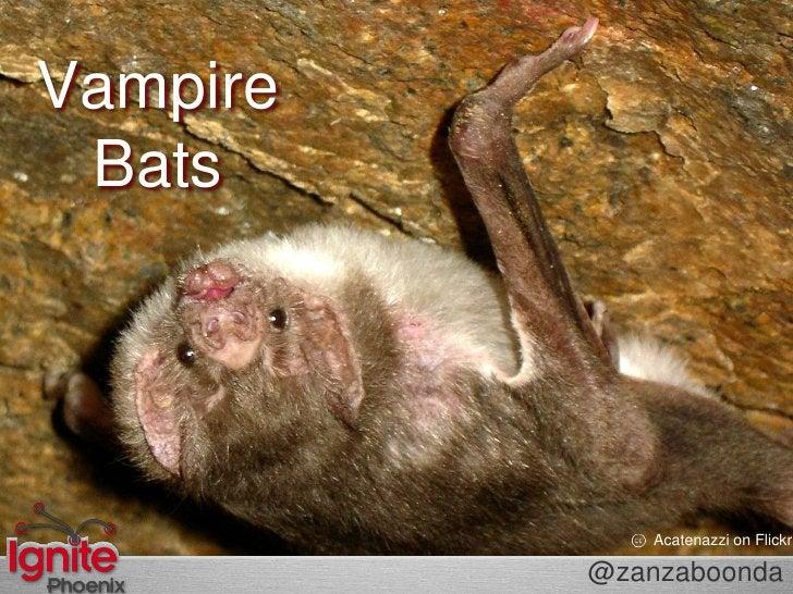Vampire Bats<br />Acatenazzion Flickr<br />@zanzaboonda<br />