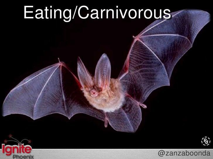 Insect-Eating/Carnivorous<br />@zanzaboonda<br />