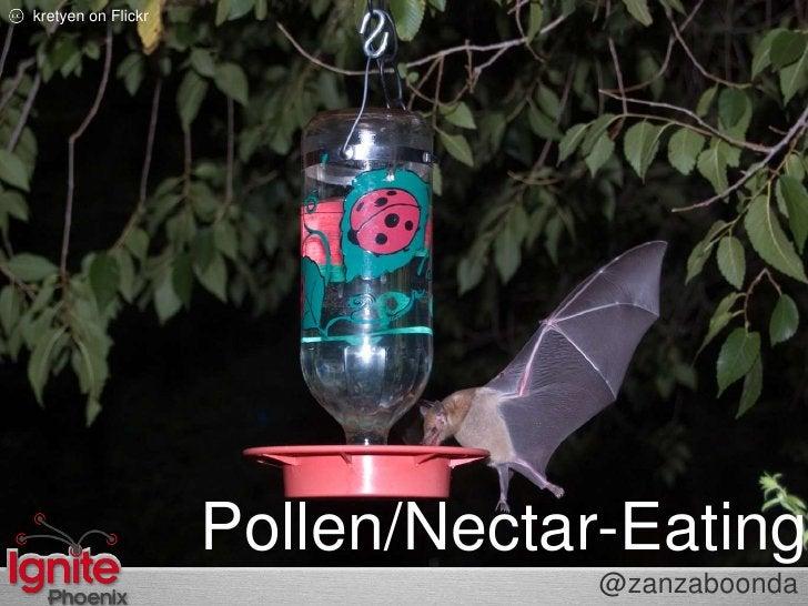 kretyenon Flickr<br />Pollen/Nectar-Eating<br />@zanzaboonda<br />