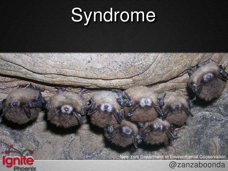 White Nose Syndrome<br />New York Department of Environmental Conservation<br />@zanzaboonda<br />