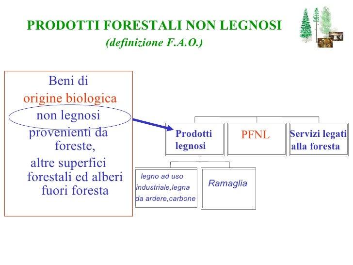 <ul><li>Beni di </li></ul><ul><li>origine biologica </li></ul><ul><li>non legnosi </li></ul><ul><li>provenienti da foreste...