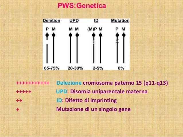 PWS:Genetica  +++++++++++ Delezione cromosoma paterno 15 (q11-q13)  +++++ UPD: Disomia uniparentale materna  ++ ID: Difett...