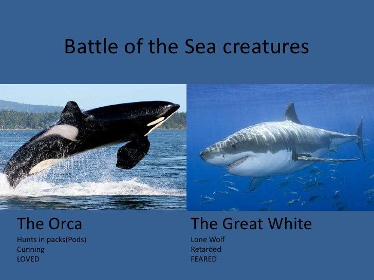 Killer Whale Vs Great White Shark Size