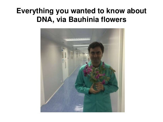 Everything you wanted to know about DNA, via Bauhinia flowers