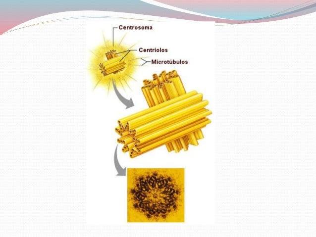 Centrosoma