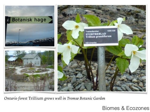 Biomes U0026 Ecozones; 16.
