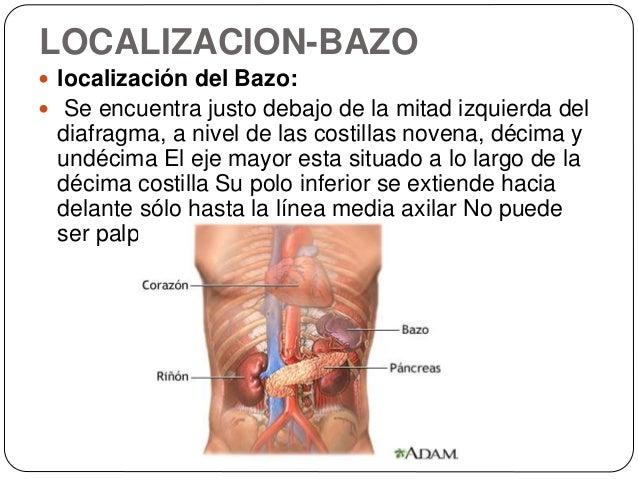 bazo-12-638.jpg?cb=1448168378