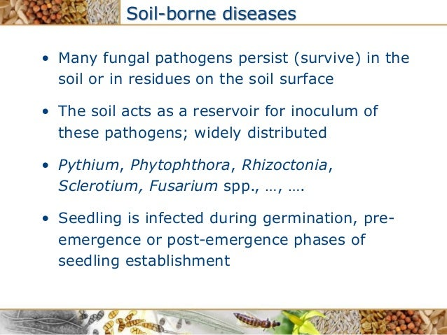 Ineke wijkamp for Soil borne diseases