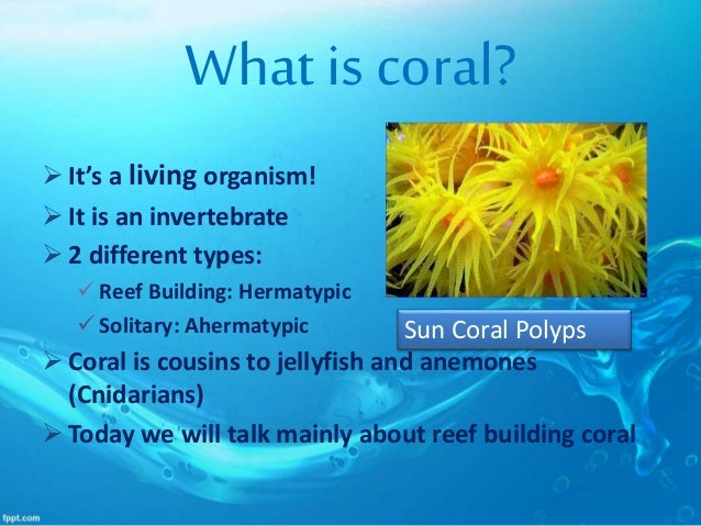 adventures of coral reef