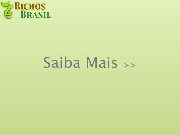 Saiba Mais   >>
