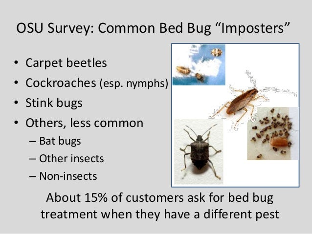Bed Bug Biology Behavior And Research Update