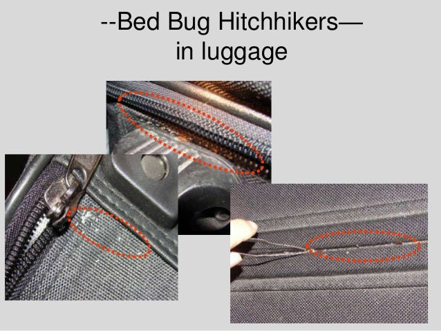 bedbugs research Travelers' luggage is an attractive harbor for bed bugs, which then hitch a ride to new locations in the search for effective bed bug repellents, researchers at connecticut agricultural experiment station and bedoukian research, inc, have found that deet as well as several naturally derived compounds could protect luggage from attracting.