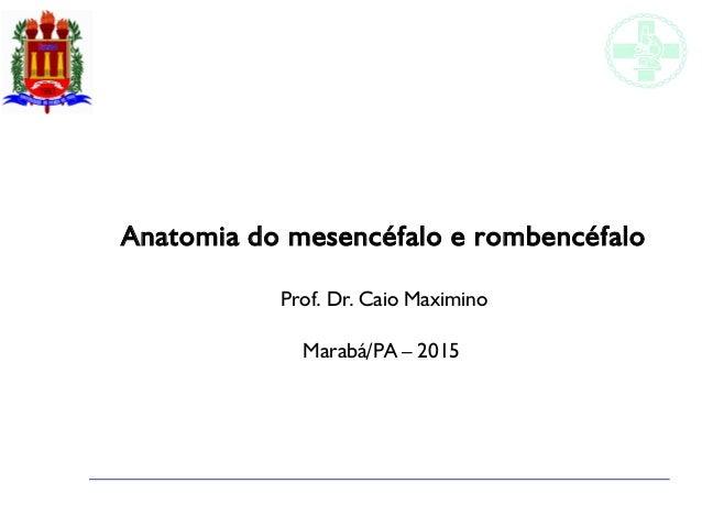 Anatomia do mesencéfalo e rombencéfalo Prof. Dr. Caio Maximino Marabá/PA – 2015