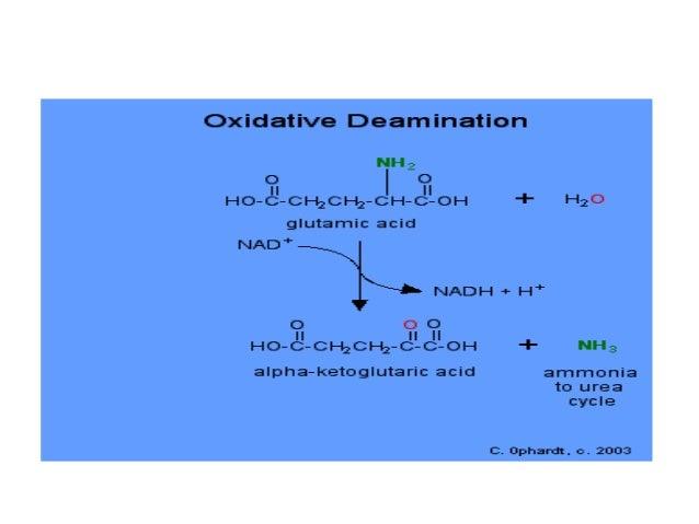 transdeamination and deamination